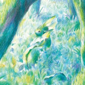イラストカードセット「森」