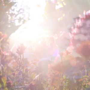 2016年6月展示作品 「金色の光の畑でキミをさがす」