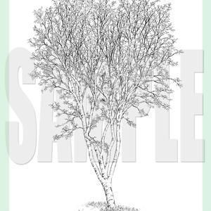 yl03_tree_01-02.zip