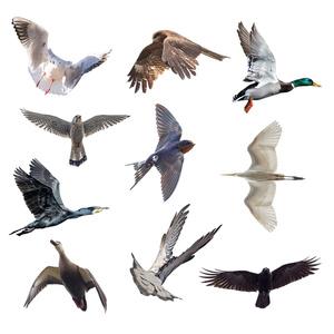 翼のポーズコレクション