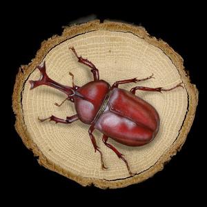 【原画】輪切り絵アート:赤いカブトムシ Ver1.4 (Lucanus maculifemoratus)