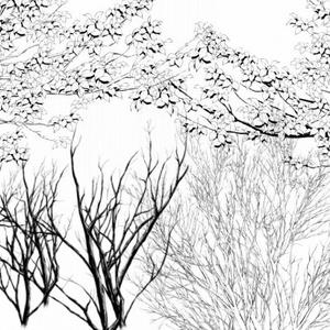枝マルチブラシ白黒2種セット_コミスタ・クリスタ兼用素材