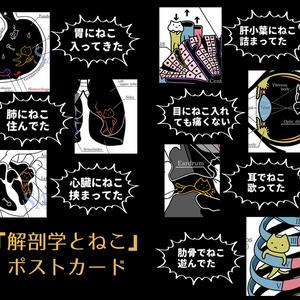 解剖学とねこポスカ【新作含む10種】
