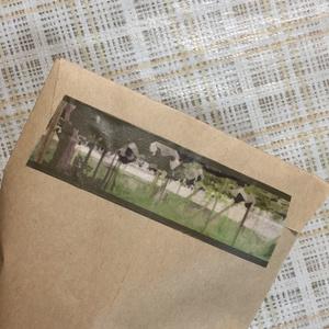 柏原葡萄 収穫期 マスキングテープ