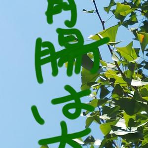 デジコン 自然 みどり 植物 ぽかぽか 空 ひなたぼっこ 雲 フラッシュ 光