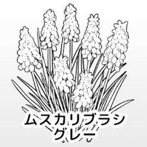 ムスカリブラシ/グレー/クリスタ